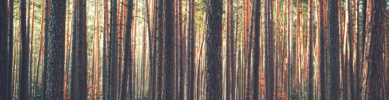 Деревянные окна Винвуд -  с любовью к природе